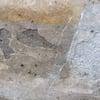 gris-foussana-limestone-frost-damage-100x100